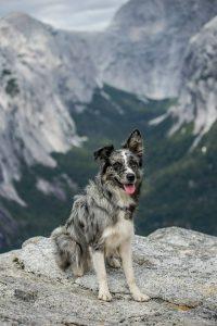 treking con perros