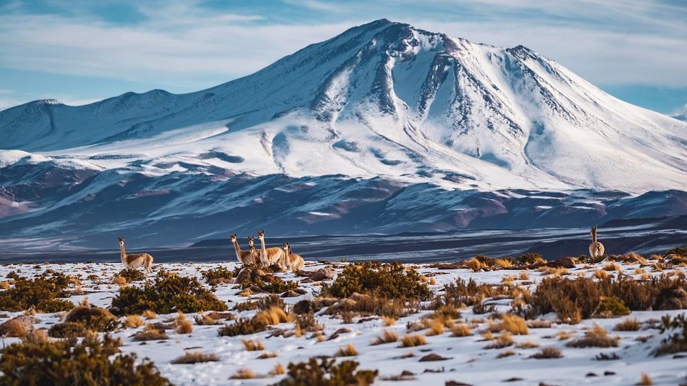 enfoque altiplano